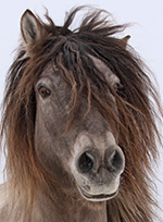 mt-0102-home-horse-breeds1.jpg