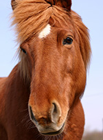 mt-0102-home-horse-breeds2.jpg