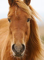 mt-0102-home-horse-breeds3.jpg