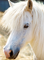 mt-0102-home-horse-breeds4.jpg