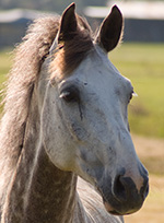 mt-0102-home-horse-breeds5.jpg